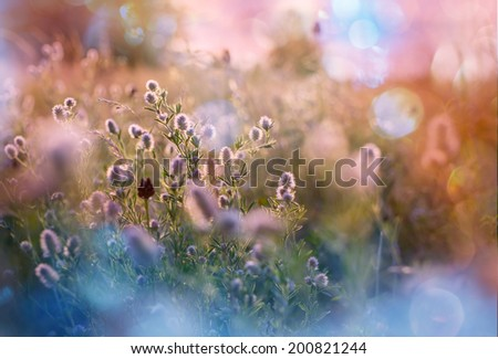Summer sunny meadow - stock photo