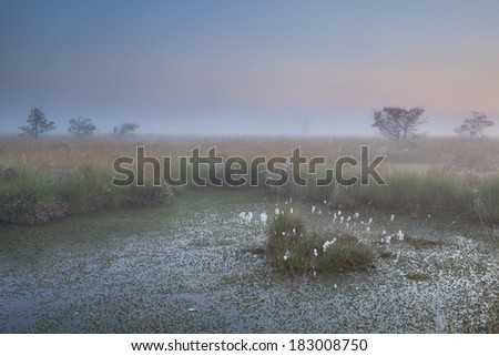 summer sunrise over swamp, Fochteloerveen, Drenthe, Netherlands - stock photo