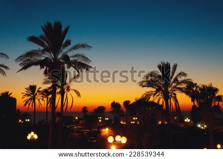 Summer sunset at a coastline with palm tree silhouettes. Evening in city at the sea, beautiful lantern illumination.