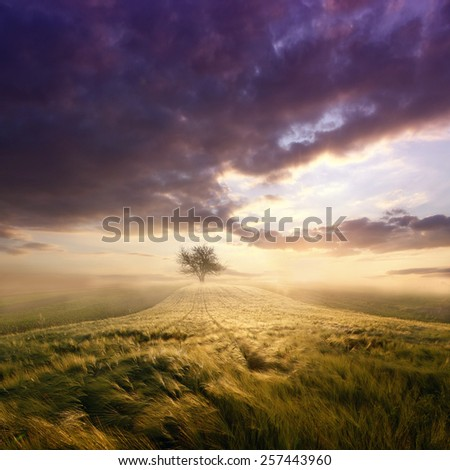 Summer sunset field with a tree - stock photo