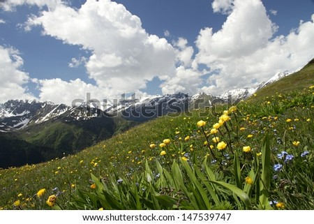 Summer time, meadow below the mountain by name Alp  at middle Europe in Austria, mountain Grossglockner