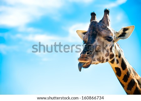 Summer trip to the park with wild animals as giraffe and other
