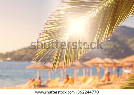 Summer Vacation,Holiday Destination ,Travel, Tourism concept with green palm tree branches, over beach and sea. - stock photo