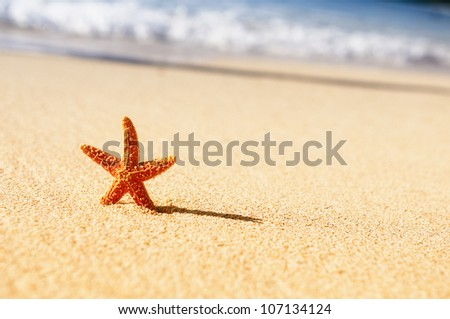 Summer vacations - starfish on sunset sea sand beach - stock photo