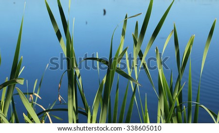 Summer view: grass against the water background - stock photo
