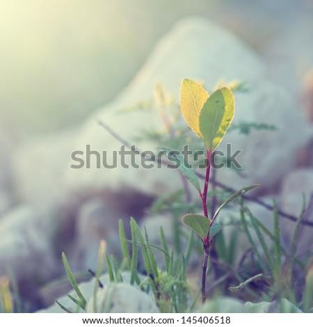 summer vintage beautiful plant on sunrise - stock photo