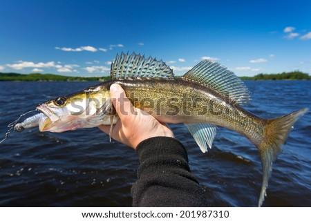 Summer walleye fishing trophy - stock photo