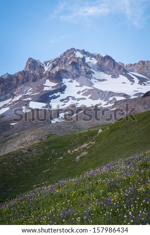 Summer wildflowers on Mt. hood in the cascade range of Oregon - stock photo