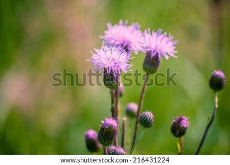 summer wildflowers under bright sun - stock photo
