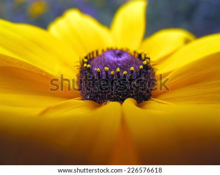 Summer yellow wild flower - stock photo