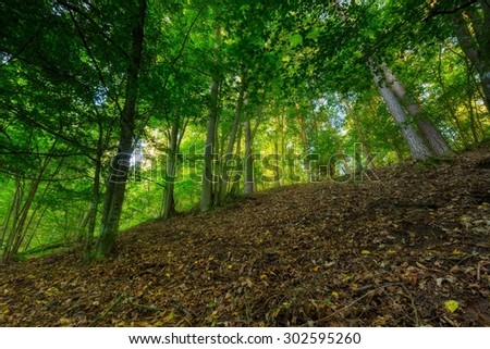 Summertime green forest photographed at sunrise. Place near river Wadag near Olsztyn, Poland (Warmia and Mazury lake district) - stock photo