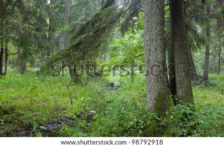 Summertime look of natural deciduous stand with little stream crossing and branches hanging over - stock photo