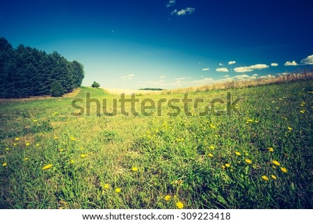Summertime meadow under blue sky. Vintage photo. Tranquil countryside at warm and sunny day. Polish rural landscape - stock photo