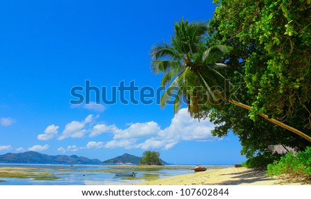 Summertime Sea Palms - stock photo
