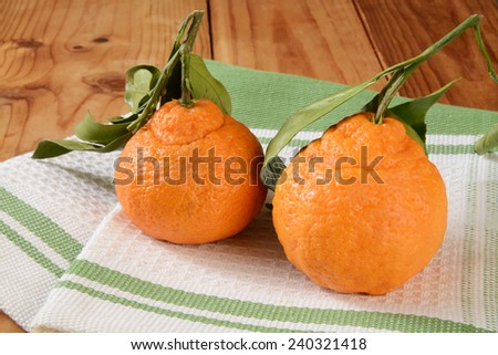 Sumo oranges with leaves, a sweet seedless orange that is a cross between a Mandarin and a California navel orange - stock photo