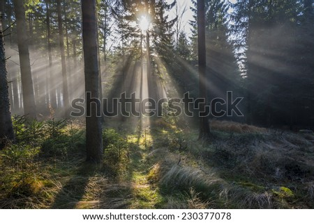 sun and fog in the forest