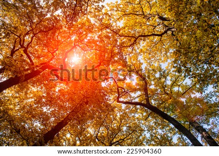 Sun at the autumn forest - stock photo