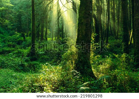 sun beam in the forest - stock photo