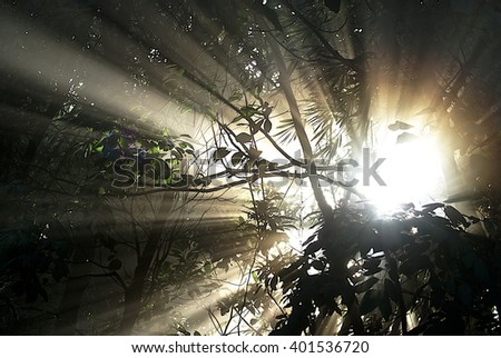 Sun beam on early morning in the forest