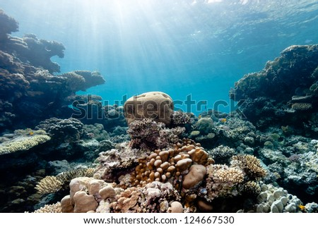 Sun beams filter down illuminating a small brain coral - stock photo