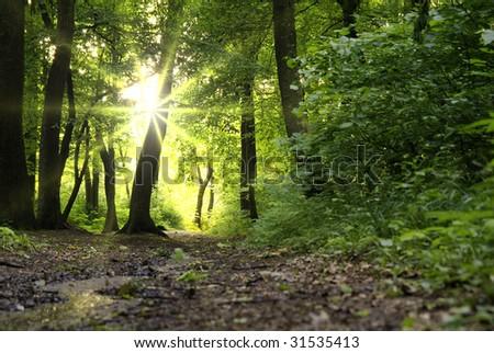 Sun beams in dark forest - stock photo