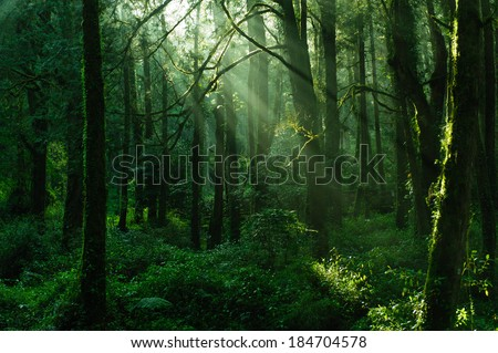 sun beams in the forest in ali mountain - stock photo