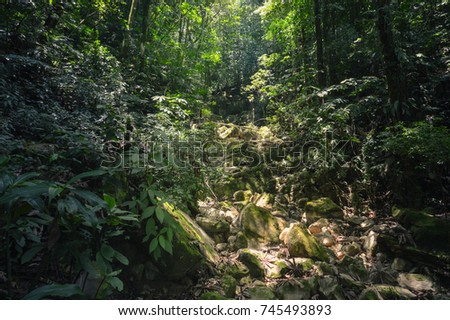 Sun beams lighting the rocky trail in the cloud forest of Santa Barbara National Park, Western Honduras. Central America