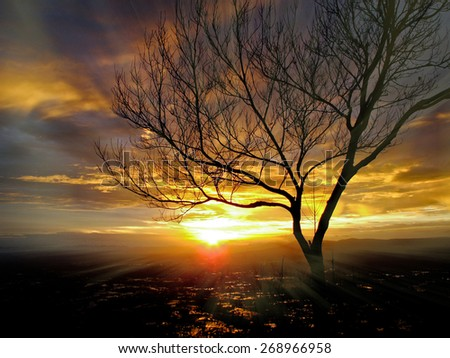 Sun beams thorough branches of tree - stock photo