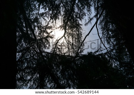 Sun behind the tree. Czech Republic