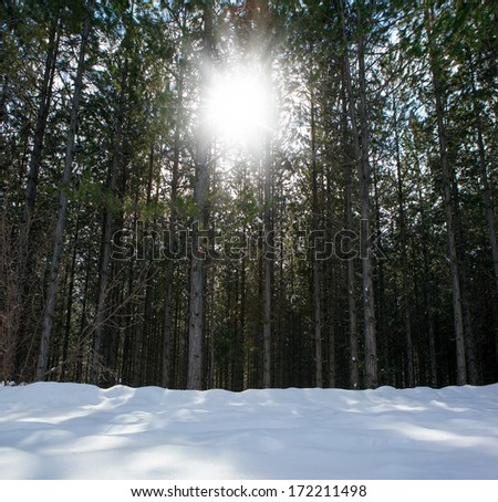 sun behind the trees and snowy field  - stock photo