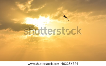 Sun between clouds and a bird flying.