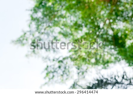 Sun Bokeh on the natural tree against sky background