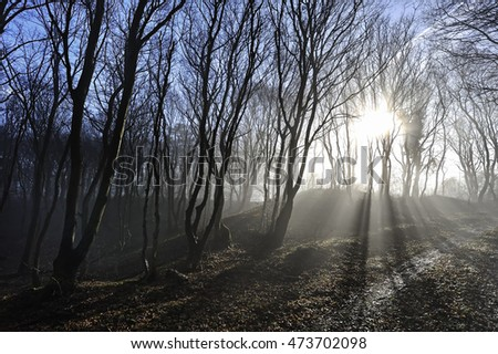 Sun breaks through the forest in spring