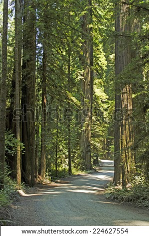 Sun comes in the rainforest of Redwoods in the Del Norte Coast Redwoods State Park in Northern California - stock photo