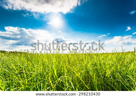 Sun comes out of cumulus clouds and illuminates a fields in the forest. Focus on the grass - stock photo