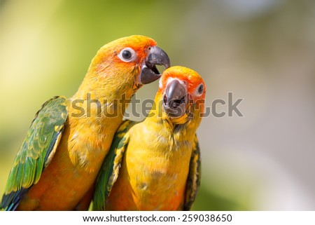 Sun conure parrot on the background of nature - stock photo