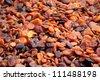 Sun-dried organic Turkish apricots - stock photo