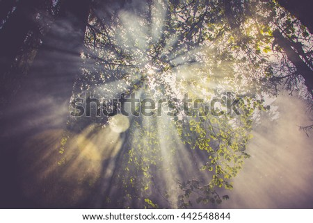 Sun flares go through the fog or smoke between green leaves in the forest - stock photo