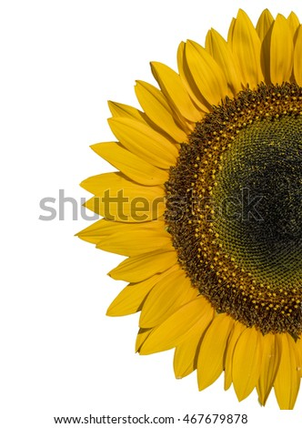 sun flower half, isolated, for background