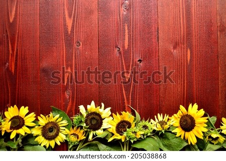 Sun flowers on brown wooden background.