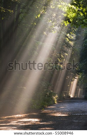 sun fog forest on a country road
