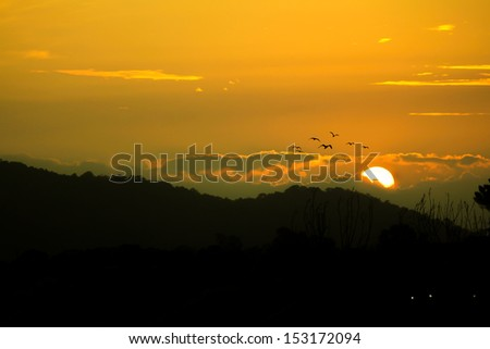 Sun goes down with flying bird in low light