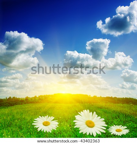 Sun,green field and daisies.