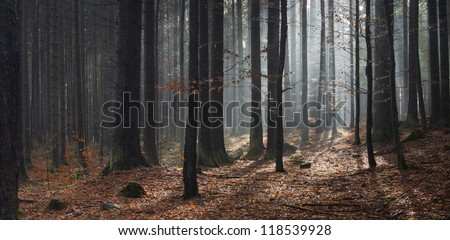 sun in forest at fall, autumn panorama - stock photo