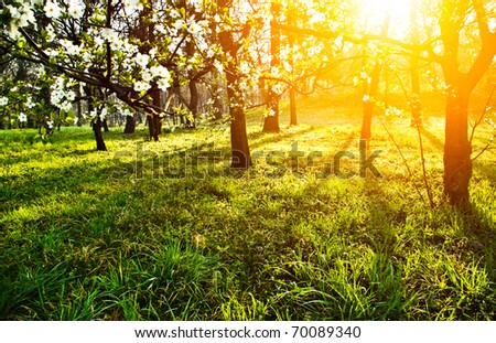 Sun in spring flowers and green grass - stock photo