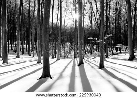 Sun in the wood between the trees strains in winter landscape in black and white - stock photo