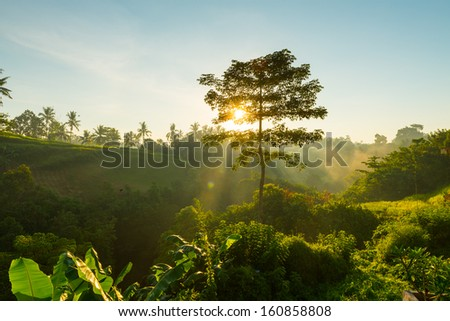 Sun is rising and shining through tree branches on Bali, Indonesia