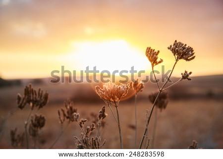 Sun Kissed Flower - stock photo