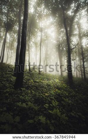 sun light in misty forest - stock photo
