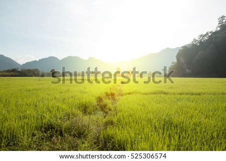 Sun light in the morning and rice field in thailand background